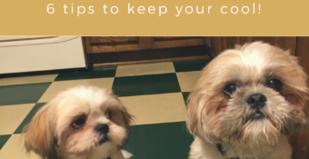Got a new pooch and overwhelmed by the mess? 6 tips to keep your cool!