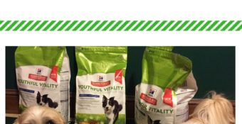 Keep Your Senior Pet in the Game with NEW Hill's® Science Diet® Youthful Vitality #AwesomeAsEver